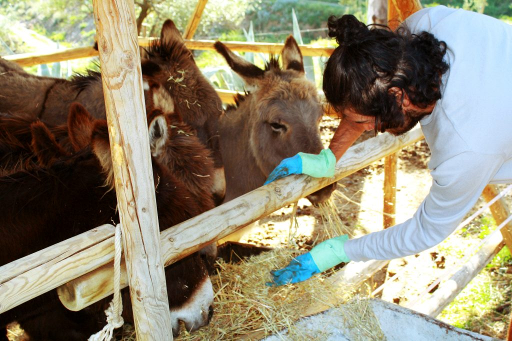 At first, the donkeys seemed to be living symbols of tranquility — greeting Joe every afternoon at their feeding trough, even eating out of the palm of his hand and reveling in his affection.